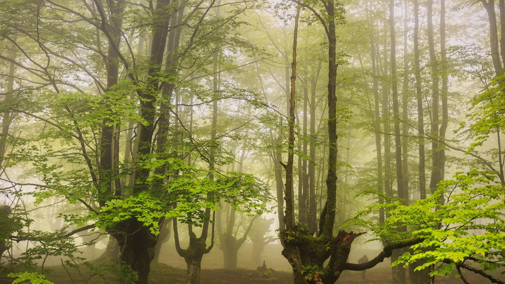 El encanto del bosque
